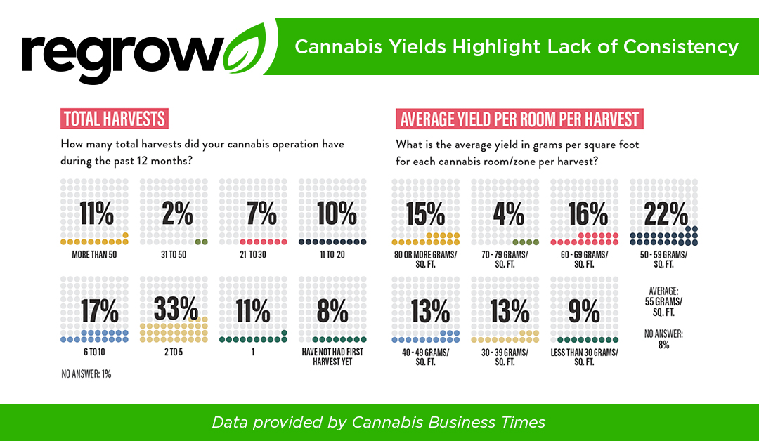 Cannabis Yields Highlight Lack of Consistency